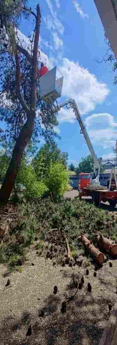 κλάδεμα επικίνδυνων ψηλών δέντρων