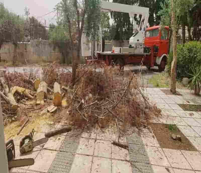 κοπή δέντρων θεσσαλονίκη και κλάδεμα με καλάθι
